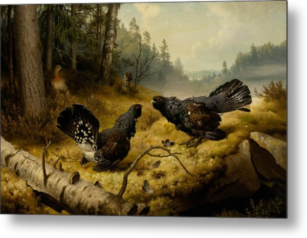 The Fighting Capercaillies Metal Print