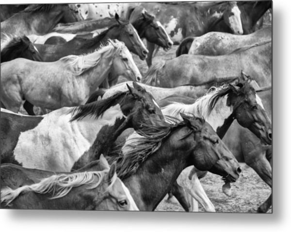 The Herd Metal Print