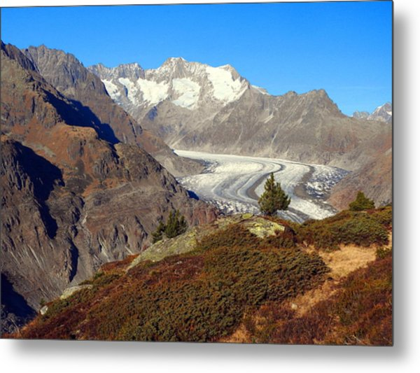 The Large Aletsch Glacier In Switzerland Metal Print