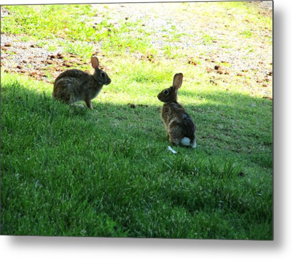 The Rabbit Dance Metal Print