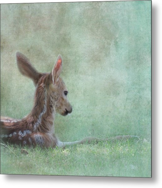 Metal Print featuring the photograph Tranquil by Sally Banfill