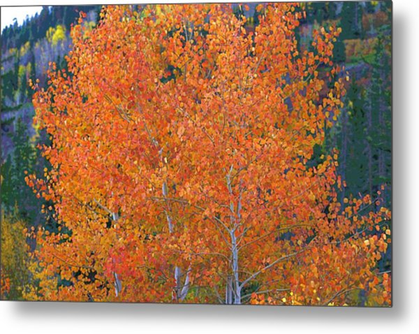 Translucent Aspen Orange Metal Print