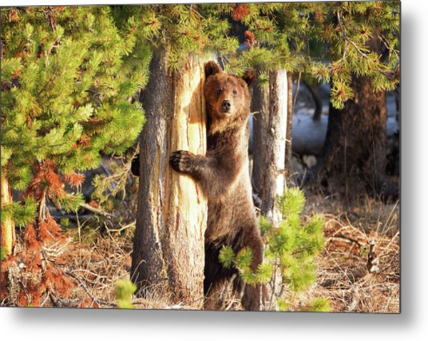 Tree Hugger Metal Print