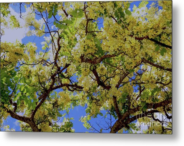 Trees And Flowers In Hawaii Metal Print by D Davila