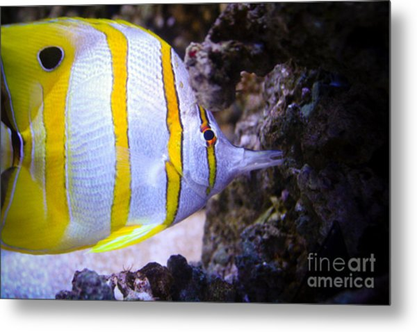 Tropical Fish Metal Print by Brenton Woodruff