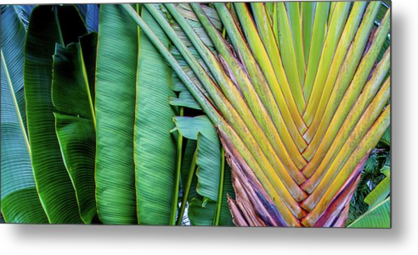Tropical Palms Metal Print