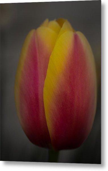 Tulip Metal Print by Denise McKay