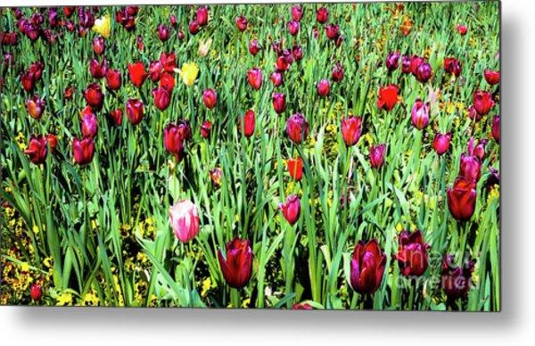 Tulips In Bloom Metal Print by D Davila
