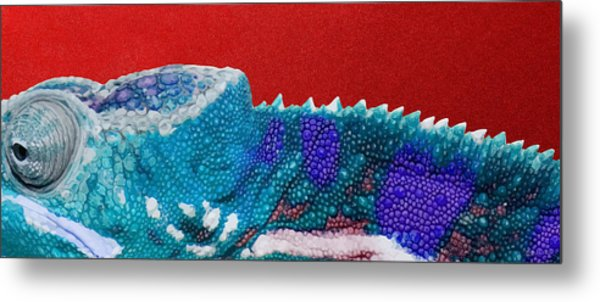 Turquoise Chameleon On Red Metal Print