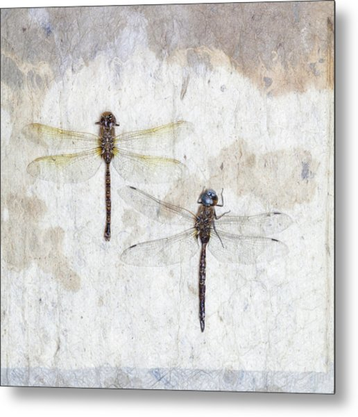 Two Dragonflies Square Metal Print