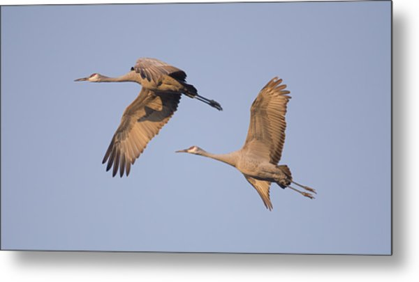 Two Together Metal Print