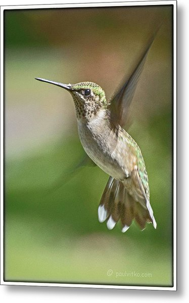 Untitled Hum_bird_five Metal Print