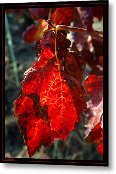 Vine Leaf At Fall Metal Print