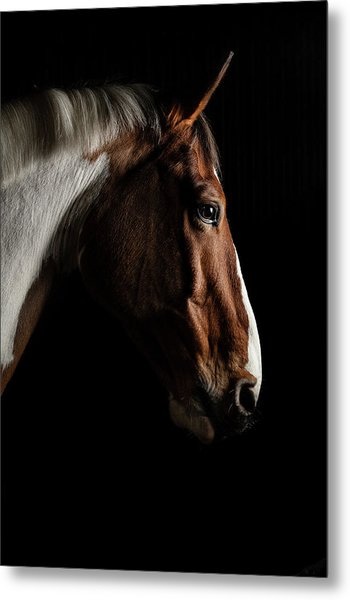 Warmblood Metal Print