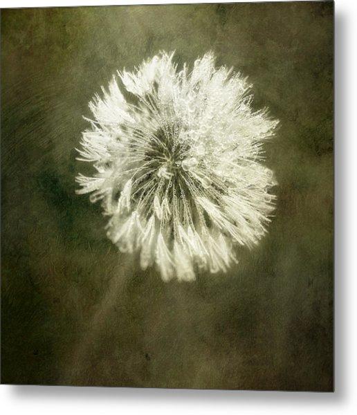 Water Drops On Dandelion Flower Metal Print