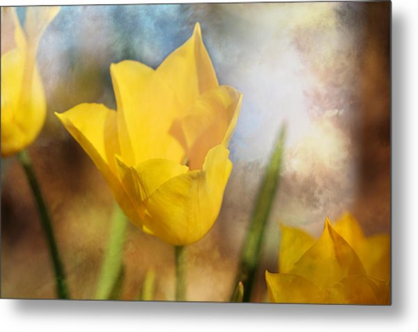 Water Lily Tulip Flower Metal Print