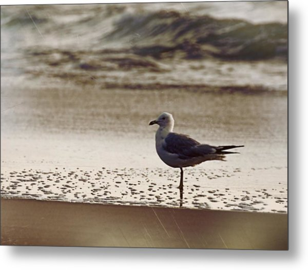 Water Wading Metal Print by JAMART Photography