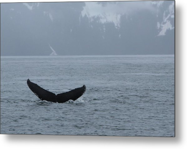Metal Print featuring the photograph Whale Fluke by Brandy Little