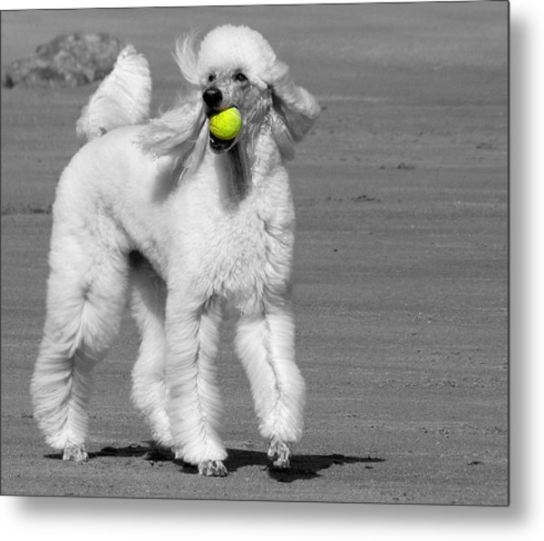 Pedicured Pup Hits The Beach Metal Print