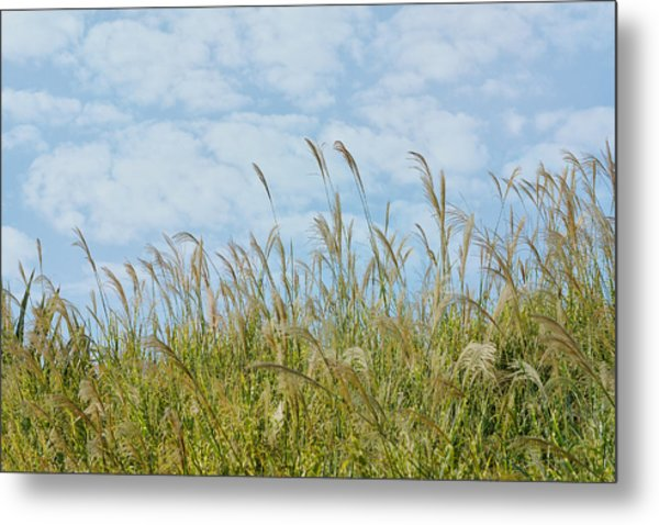 Whispers Of Summer Metal Print