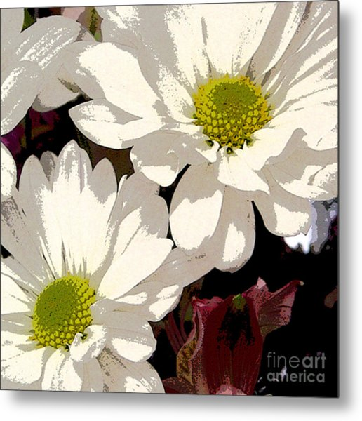 White Daisies Metal Print by Marsha Young