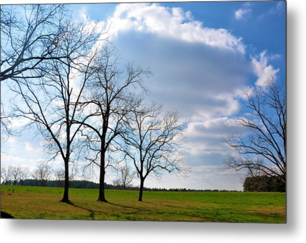 Winter Trees Metal Print by Jan Amiss Photography