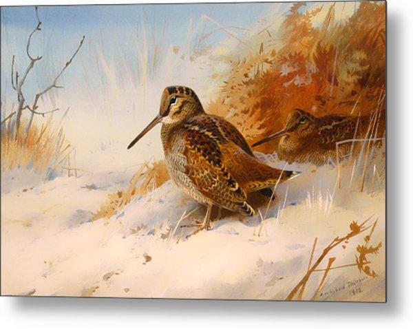 Winter Woodcock Metal Print