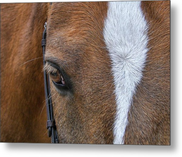 Harry The Wonder Pony Metal Print by JAMART Photography