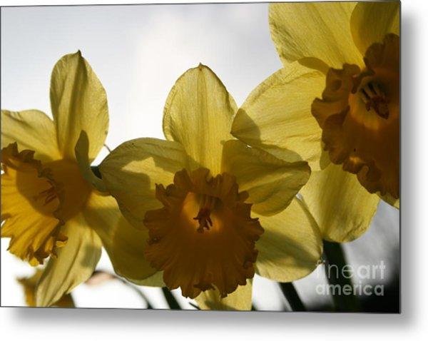 Yellow Beauty Metal Print by Valia Bradshaw