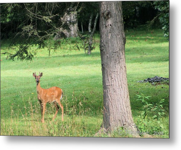 Young Buck Metal Print by Carolyn Postelwait
