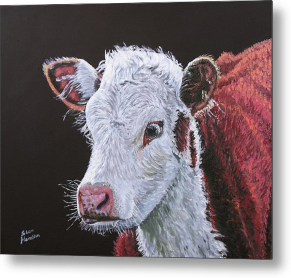 Young Bull Metal Print by Stan Hamilton
