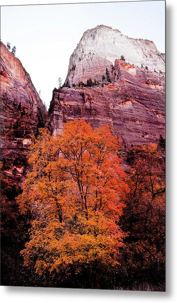 Metal Print featuring the photograph Zion National Park by Norman Hall
