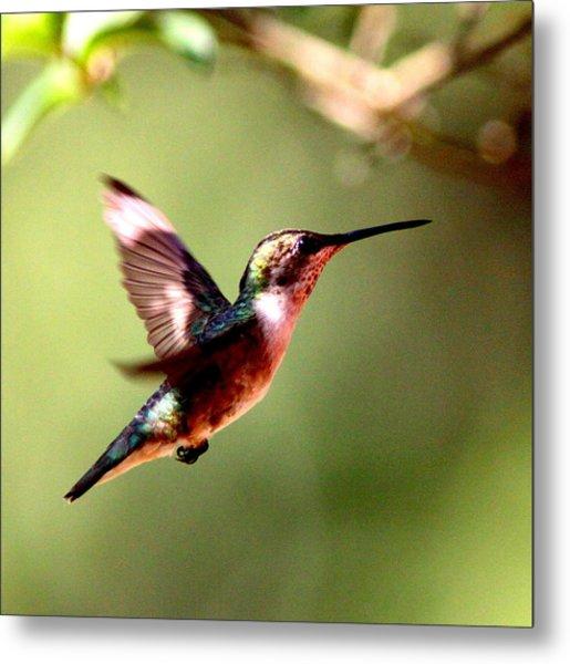 103456 - Ruby-throated Hummingbird Metal Print