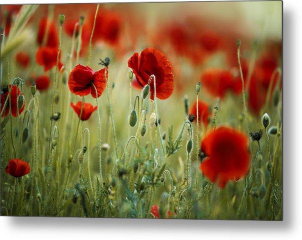Summer Poppy Meadow Metal Print