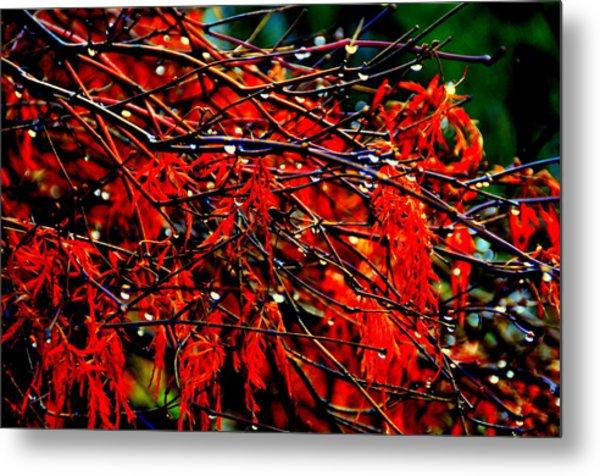 Autumn Colors Metal Print by Aron Chervin