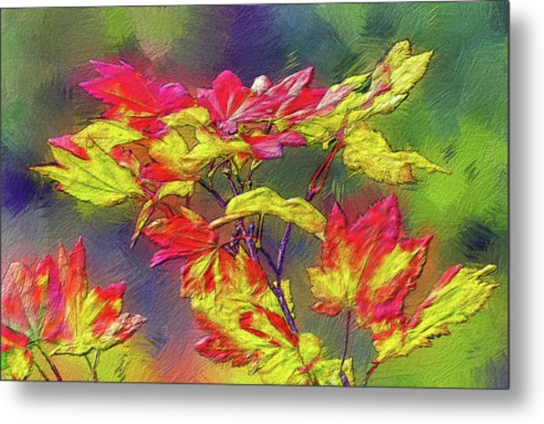Vine Maple Color Metal Print