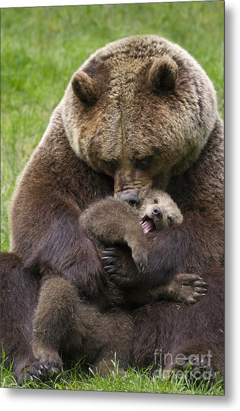 Mother Bear Cuddling Cub Metal Print