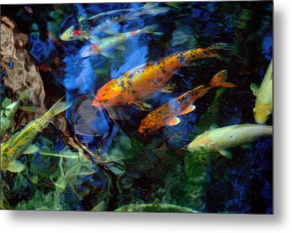 The Koi Pond Metal Print by Marc Bittan