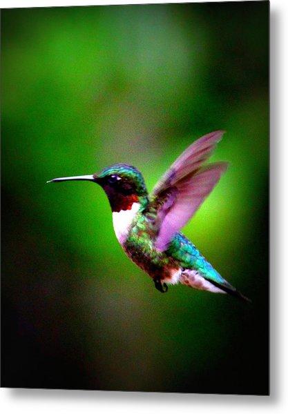 1846-007 - Ruby-throated Hummingbird Metal Print