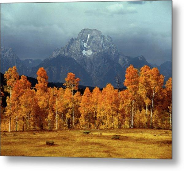 1m9235 Mt. Moran In Autumn Metal Print
