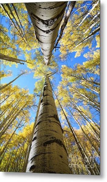 Metal Print featuring the photograph Aspens In The Fall by Kate Avery