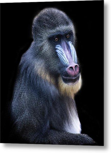 Baboon Portrait Metal Print