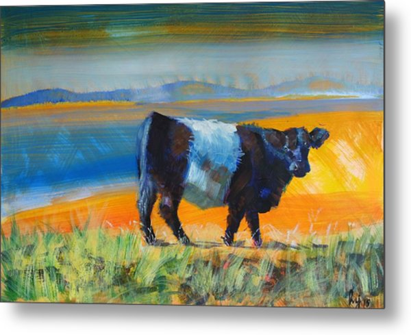 Belted Galloway Cow Metal Print