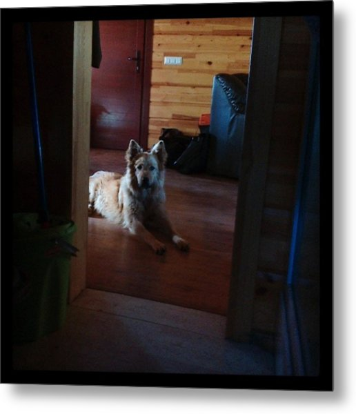 Chuvak #dog #animal #pet #portrait Metal Print
