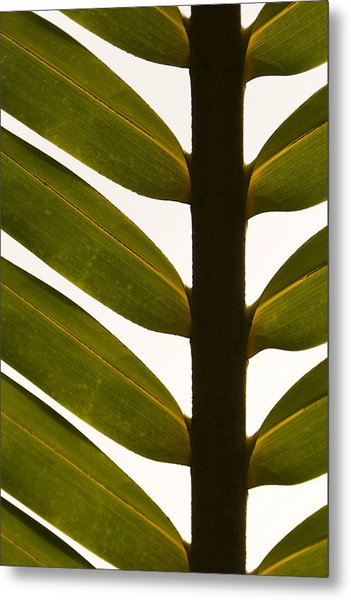 Clarity And Reason Metal Print by Shawn Young
