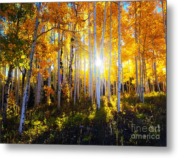 Metal Print featuring the photograph Colorado Autumn by Kate Avery