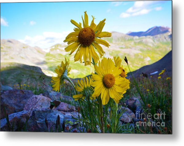 Metal Print featuring the photograph Colorado Wildflowers by Kate Avery