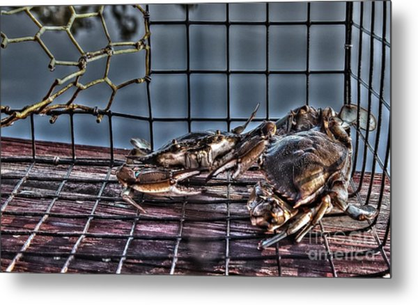 2 Crabs In Trap Metal Print