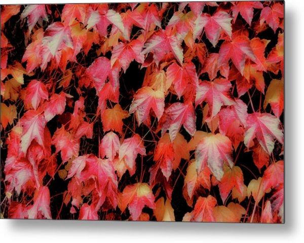 Fiery Foliage Metal Print by JAMART Photography