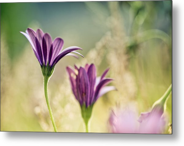 Flower On Summer Meadow Metal Print